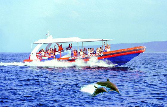 dolphin-cruise@balicruisemurah.com